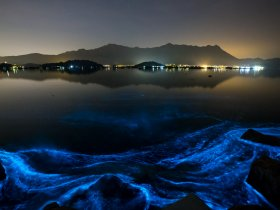 blue algae, hong-kong, red wave, algal blooms